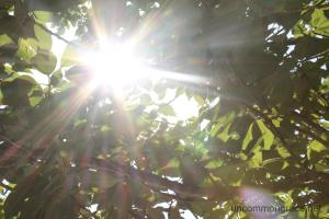 UG Sun through Trees