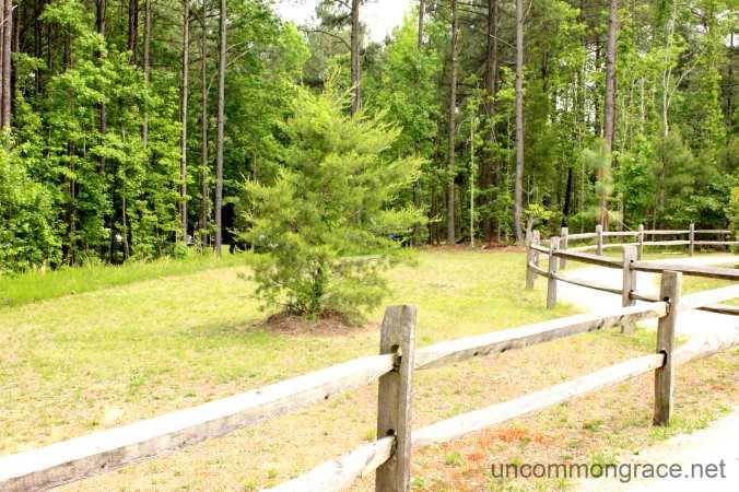 UG Tree with Fence